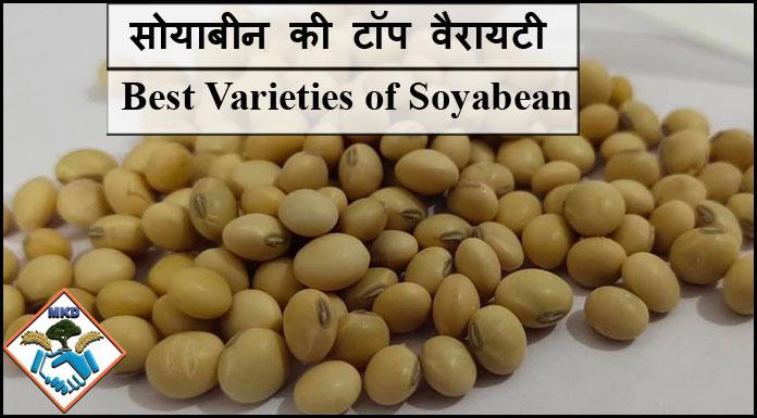 best varieties of soyabean